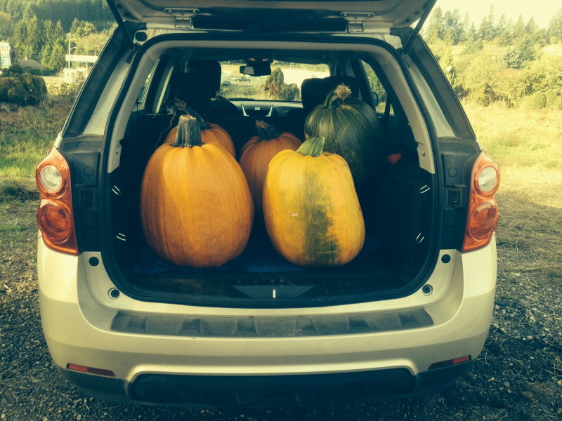 As you can see Walton Farm has the biggest carving pumpkins in town